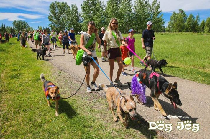 Calgary Humane Society – 17th annual Dog Jog, June 2, 2018